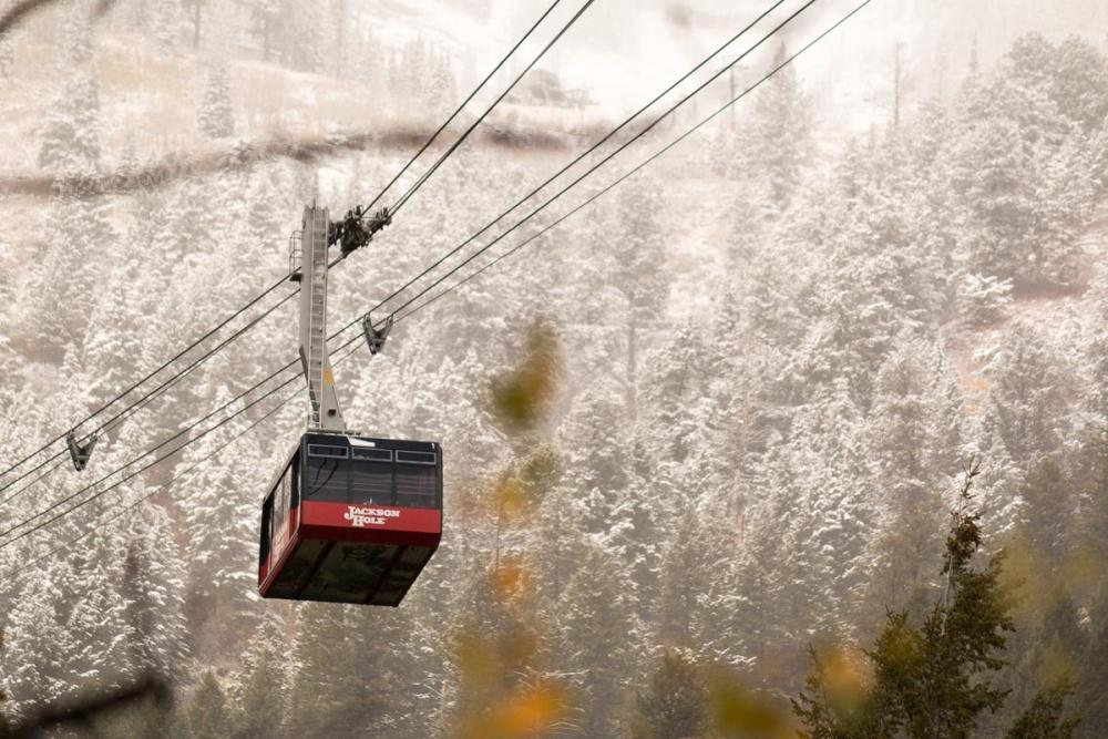 snowy-tram-20161004-as-7735-1000x667